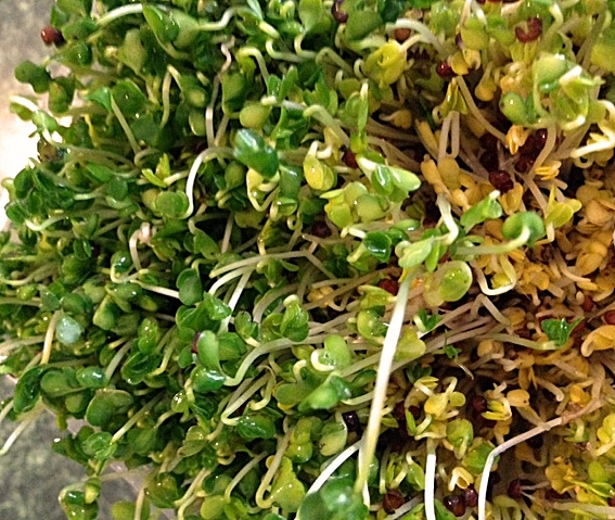 Spring Into SPROUTS!