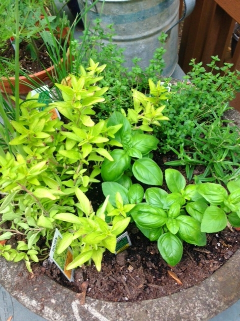 How to Use Herbs in Everyday Cooking
