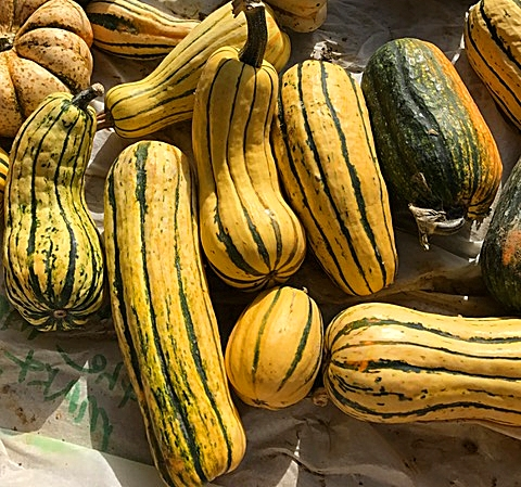 Delicata Squash – the new sensation